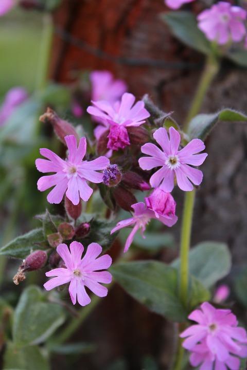 Flower, Pink, Spring, Garden, Nature