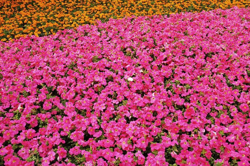 Flowers, Pink, Orange, Spring, Nature, Floral, Blossom