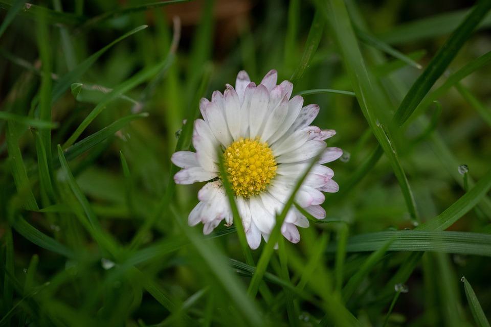 Nature, Pink, Plant, Garden, Purple, Daisy, Summer