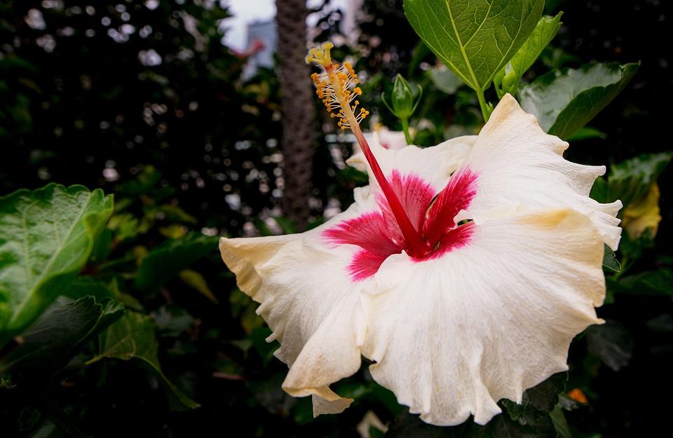 Flower, Nature, Leaf, Plant, Garden, Park, Red, Pink