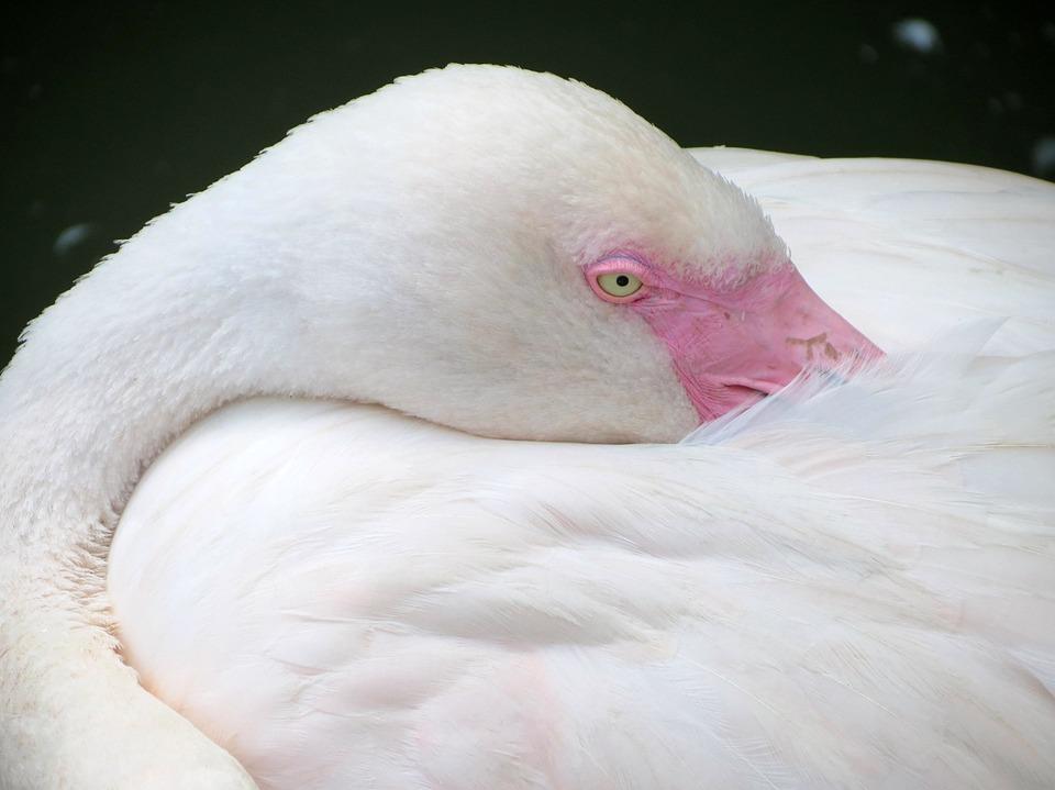 Flamingo, Bird, Nature, Pink, Pink Flamingo, Feather