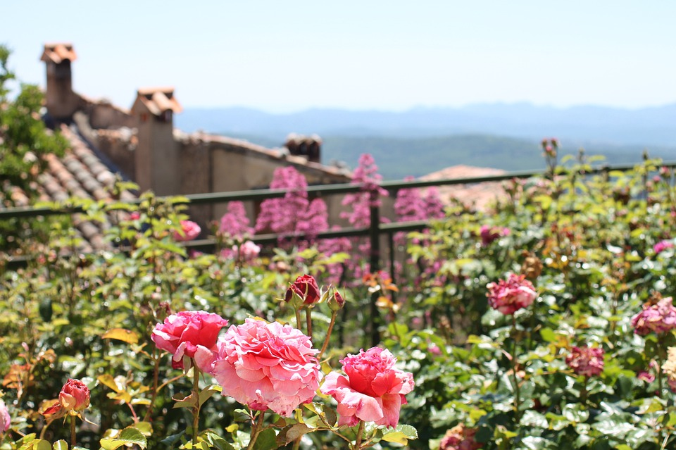 Pink, Flower, Provence, Village, Balcony, View, Spring
