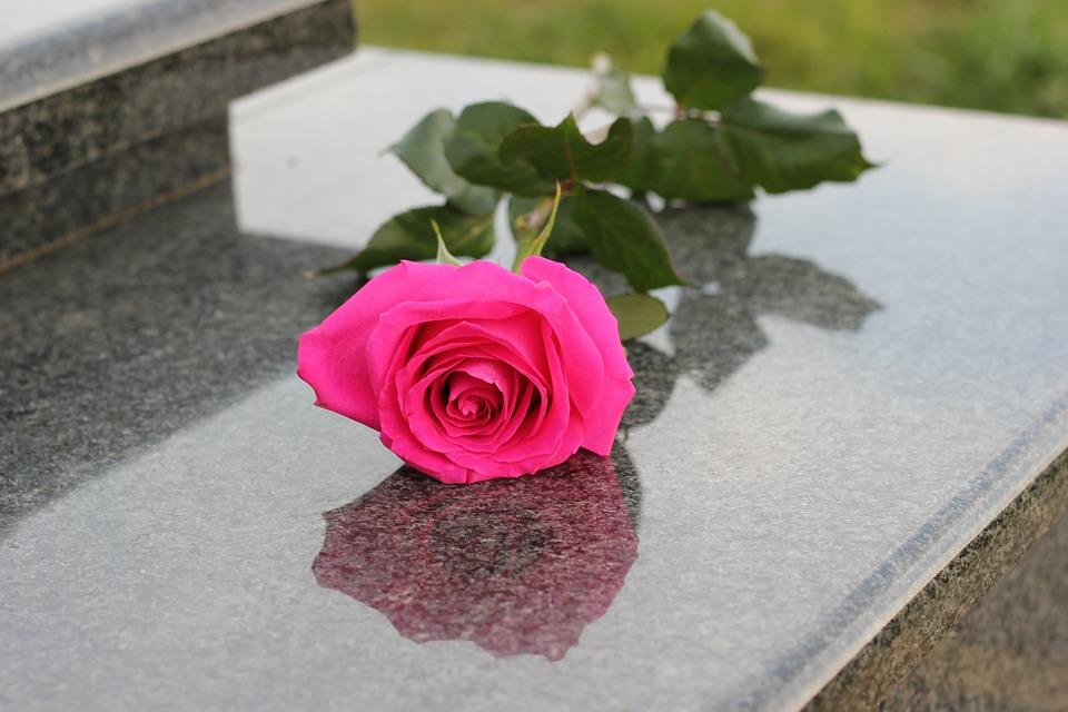 Free Photo Pink Rose Grave Graveyard Grey Marble Max Pixel