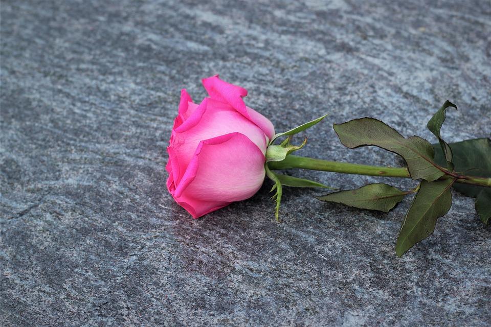 Pink Rose, Love Symbol, Lost Love, Grey Marble