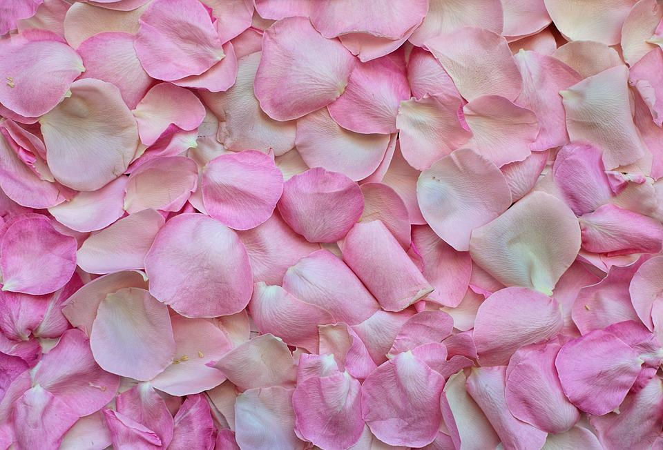 Rose Petals, Pink, Background, Love, Valentine's Day