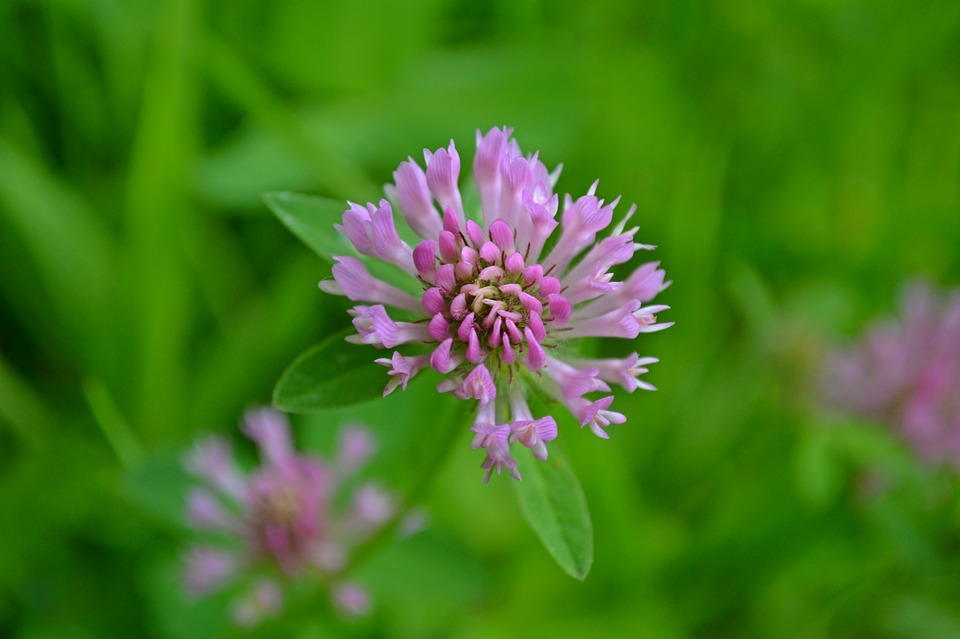 Free photo pink spring wild flowers pink flowers flowers max pixel flowers pink pink flowers spring wild flowers mightylinksfo Image collections