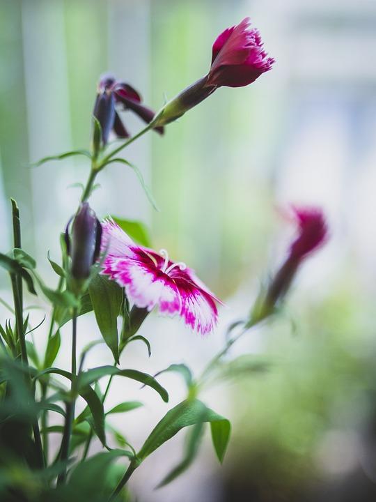Stilllife, Flowers, Mood, Balcony, Summer, Pink