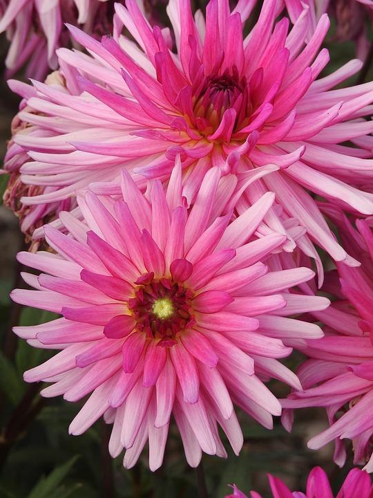 Flowers, Summer, Pink Summer Flowers