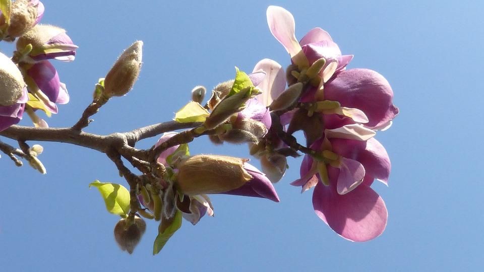 Blossom, Bloom, Spring, Flora, Pink, White, Fragrance