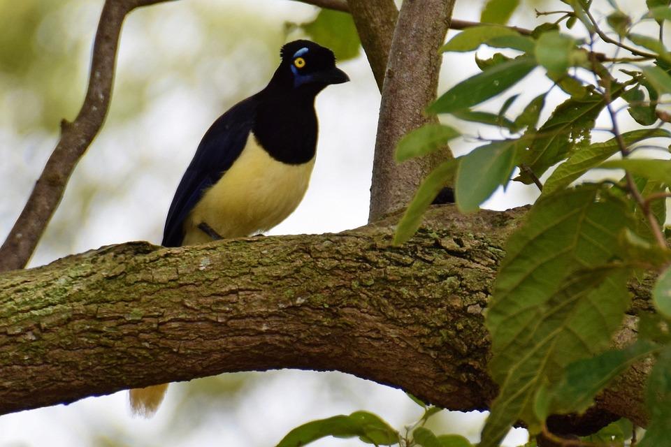 Bird, Plumage, Pity, Nature