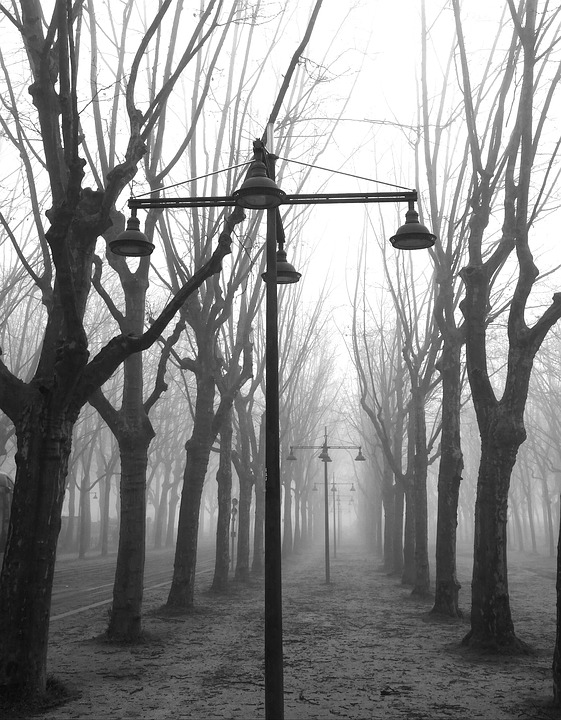 Fog, Trees, Place
