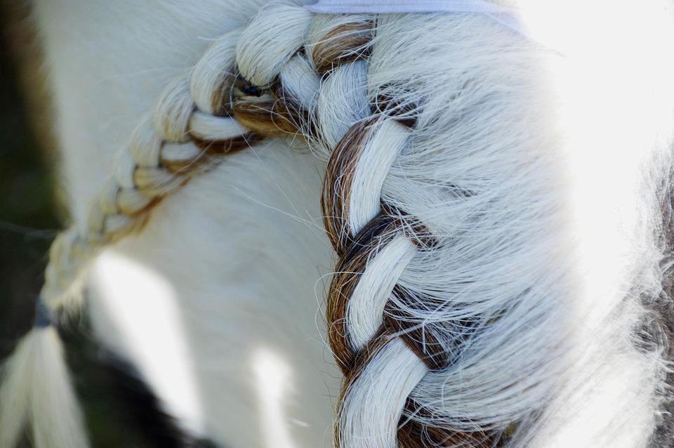 Horse, Mane, Equine, White, Horseback Riding, Plait