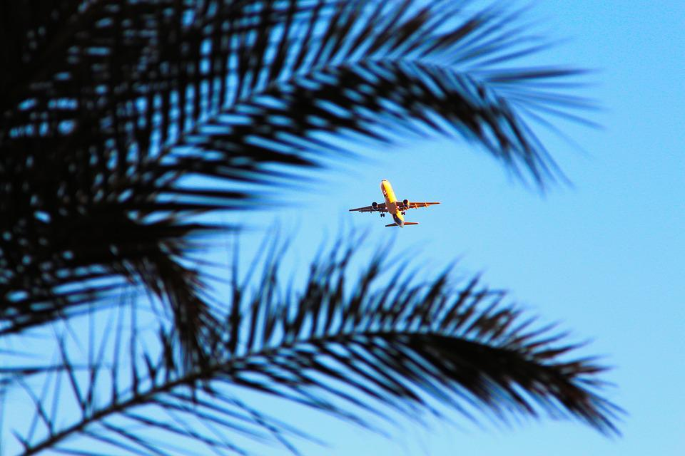 Plane, Egypt, Palma, Sky, Summer, Tourism, Beach, Trees