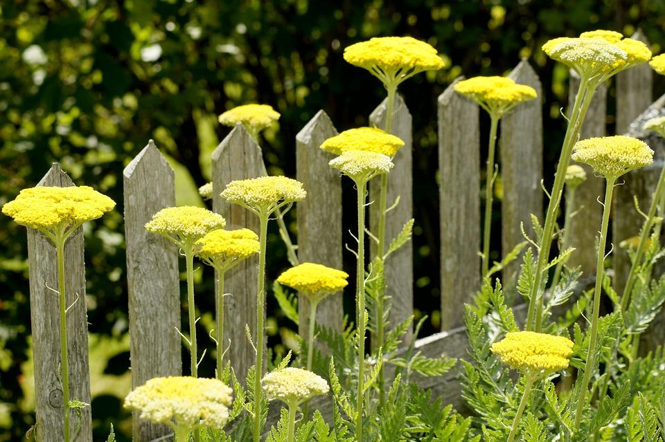 Free photo plank flowers fence garden wood green yellow max pixel fence flowers yellow green garden wood plank mightylinksfo