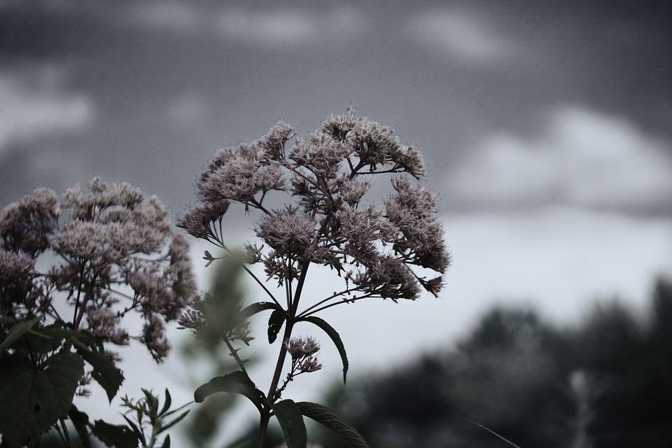 Black And White, Fall, Flower, Autumn, Natural, Plant
