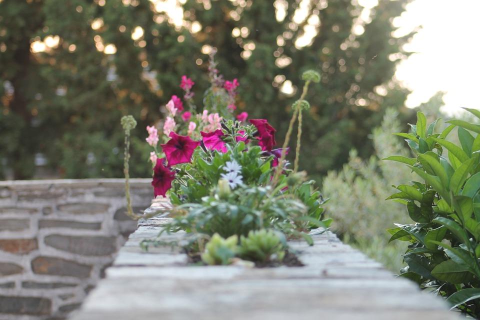 Wall, Flowers, Plant, Nature, Balcony, Terrace, Garden