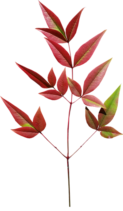 Leaves, Bamboo, Autumn, Plant