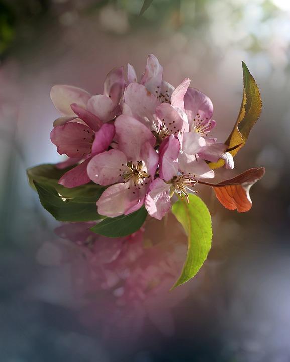 Flower, Spring, Summer, Nature, Plant, Macro, Beauty