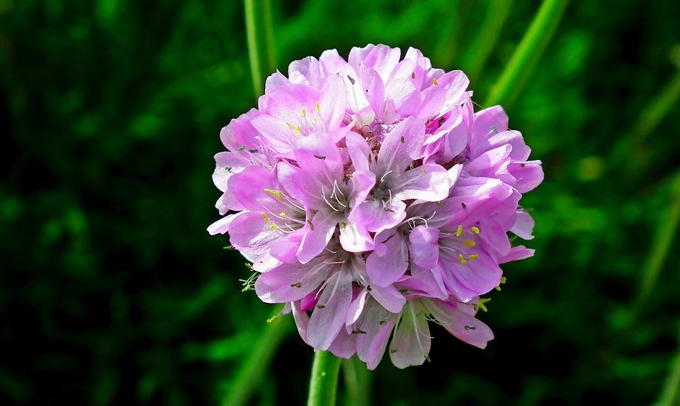 Flower, Summer, Nature, Garden, Plant, Pink, Beauty
