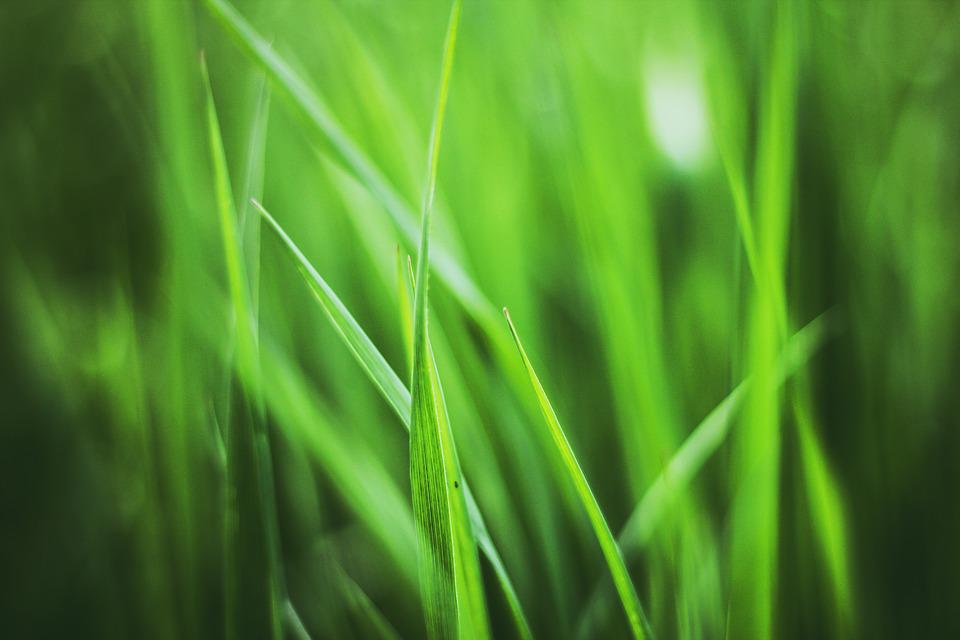 Grass, Plant, Plants, Spring, Meadow, Blade Of Grass
