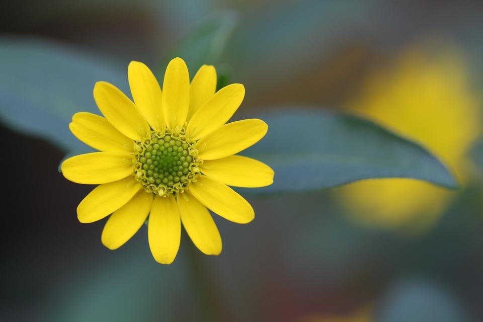 Blossom, Bloom, Macro, Garden, Plant, Flower, Star
