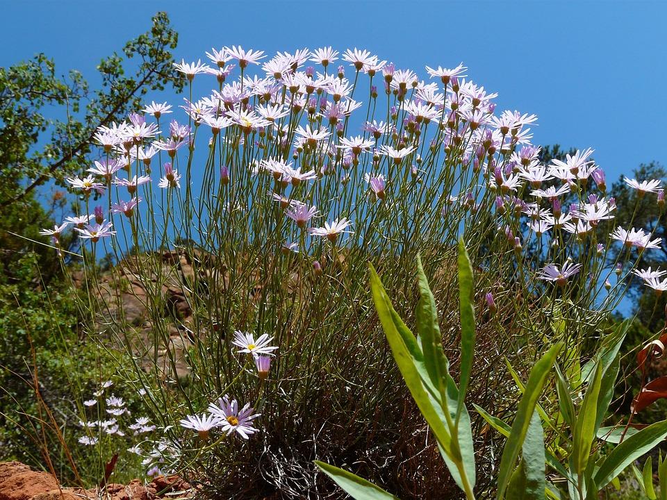 Margarithe, Blossom, Bloom, Bloom, Flower, Plant, Flora