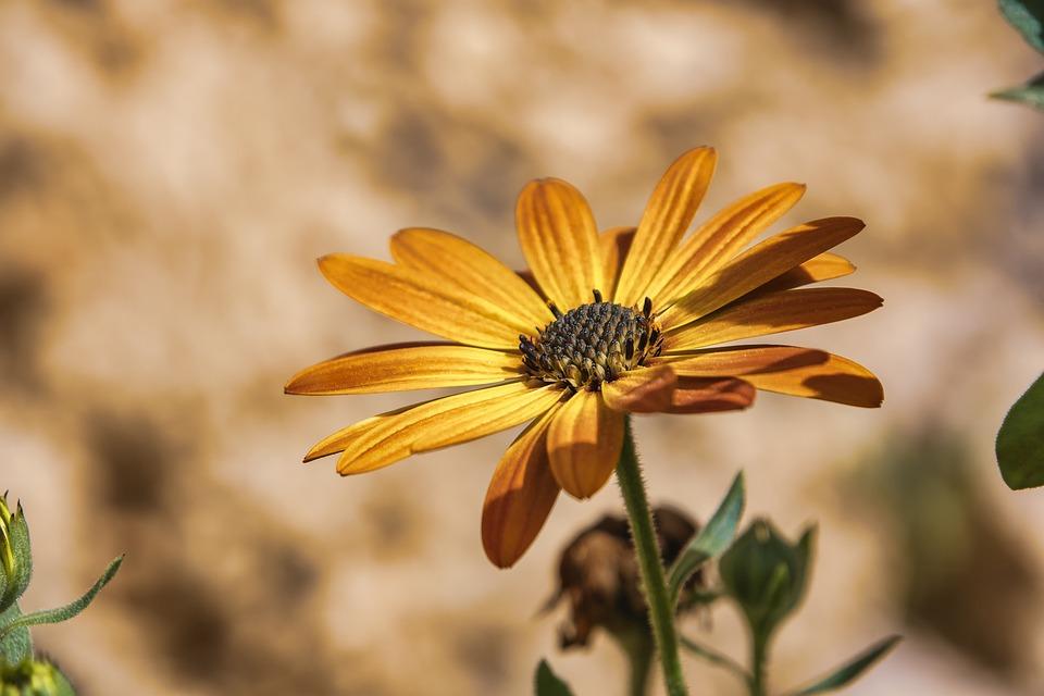 Flower, Plant, Garden, Petals, Yellow Flower, Bloom