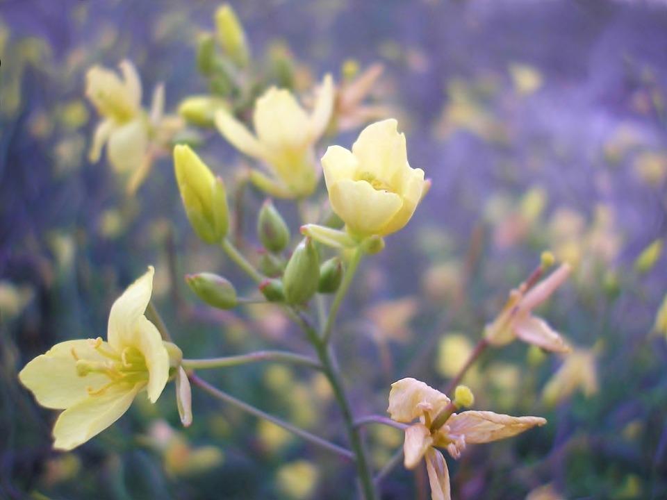 Nature, Plant, Yellow, Purple, Bloom, Green