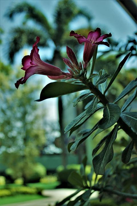 Flower, Nature, Bloom, Plant, Blossom, Leaves, Tree