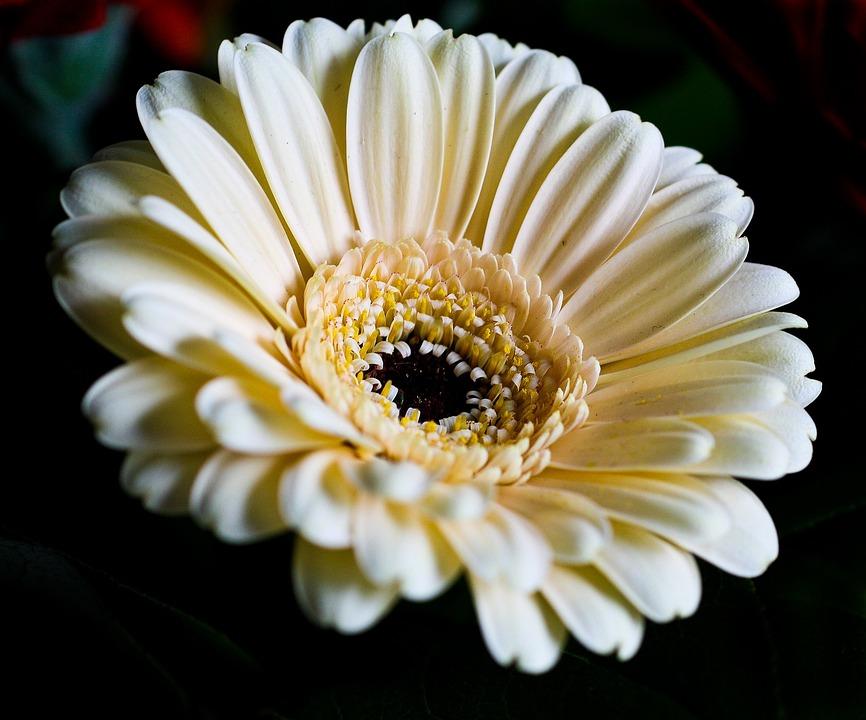 Flowers, Plant, Nature, Blossom, Bloom, Macro