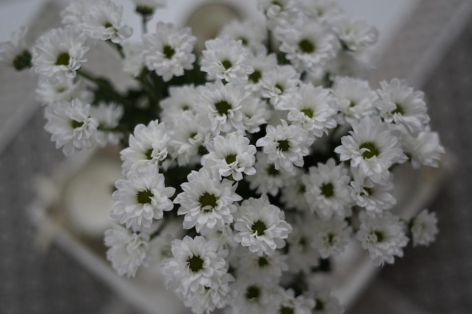 White, Flower, Daisy, Bouquet, Plant, Bloom, Blossom