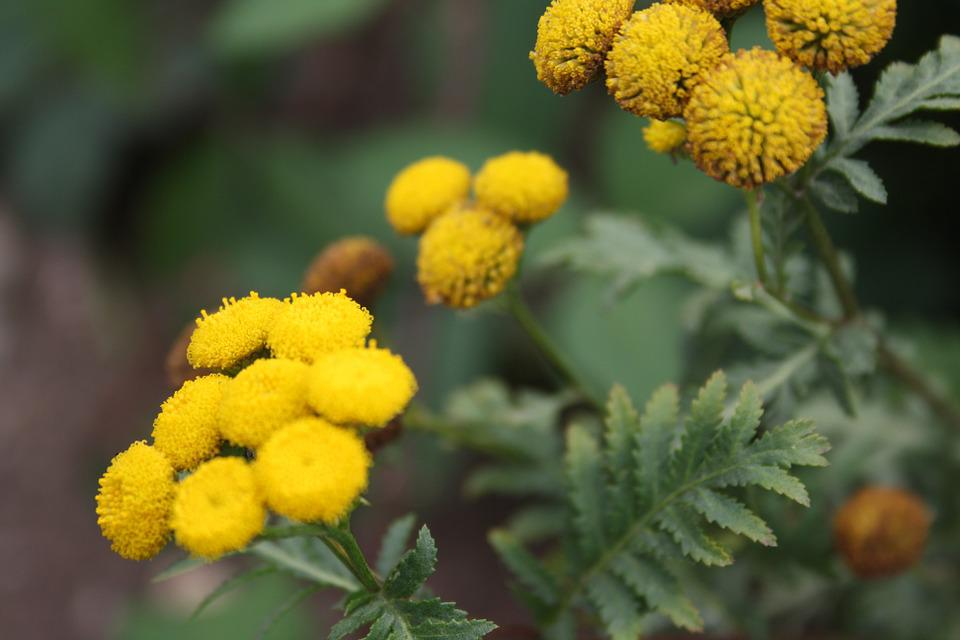 Flowers, Blossom, Bloom, Yellow, Nature, Plant, Flora
