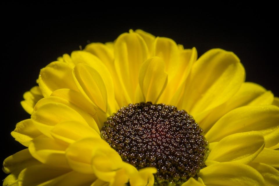Flower, Blossom, Bloom, Nature, Plant, Close