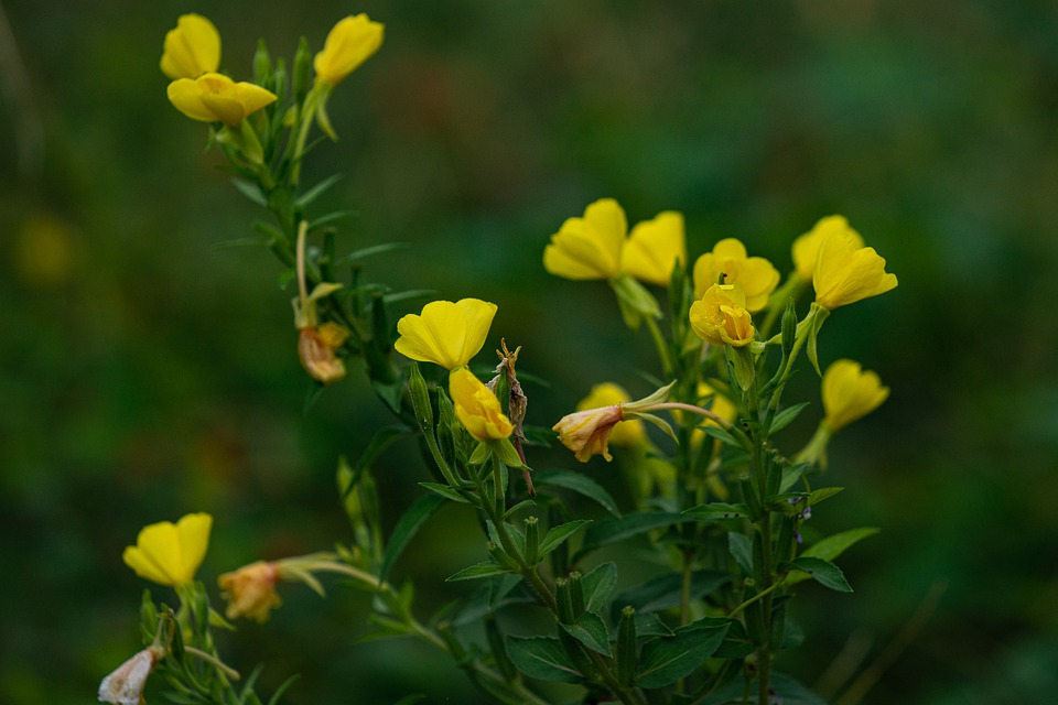 Yellow, Wildflower, Autumn, Nature, Plant, Blossom