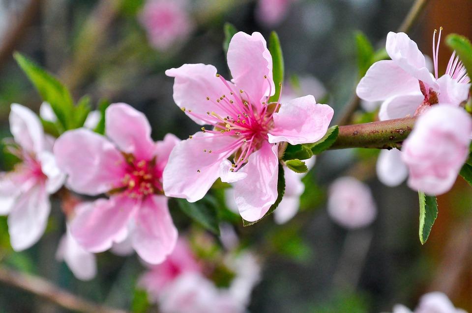 Spring, Flowers, Nature, Plant, Summer, Blossom, Flora