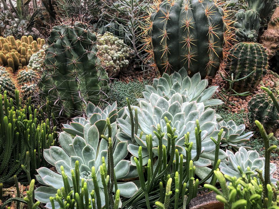 Cactus, Plant, Nature, Green, Prickly, Thorn, Botanical