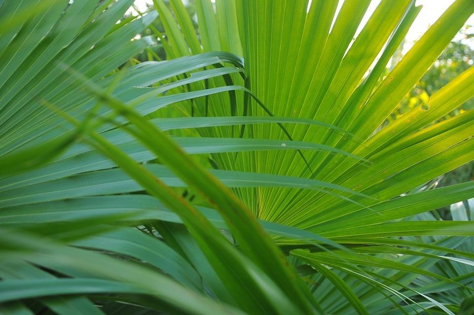 Abstract, Leaf, Plant, Background, Backgrounds, Botany