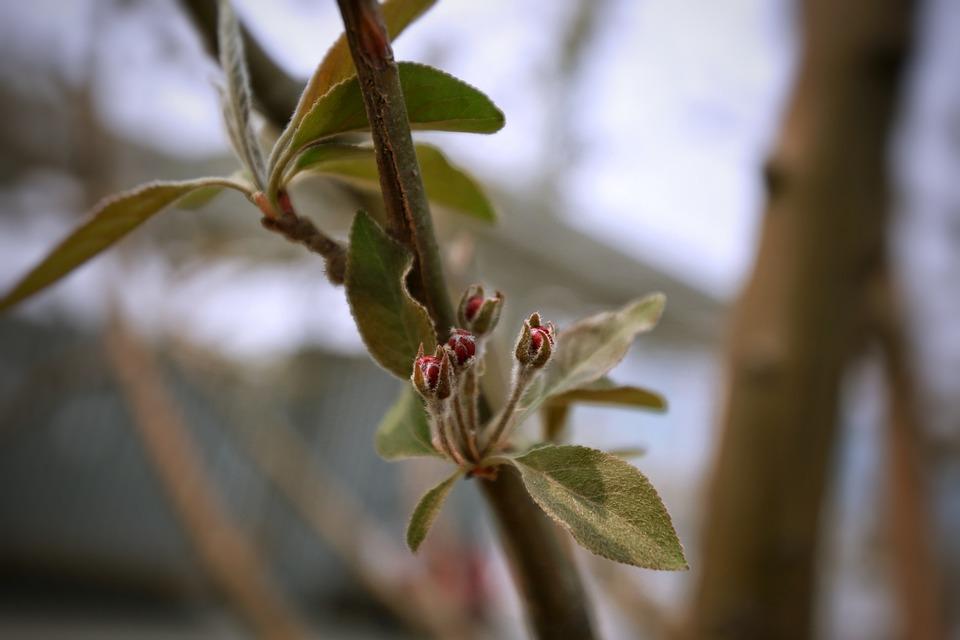 Leaf, Tree, Plant, Nature, Branch, Bud, Fruit