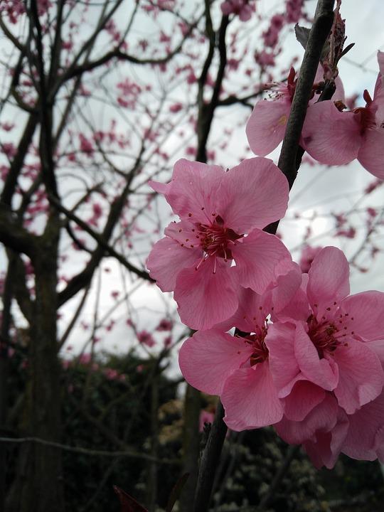 Flower, Branch, Tree, Plant