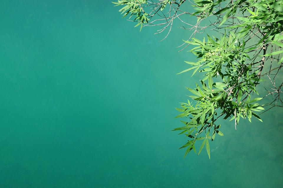Leaves, Lake, Plant, Branches, Green, Relaxation, Water