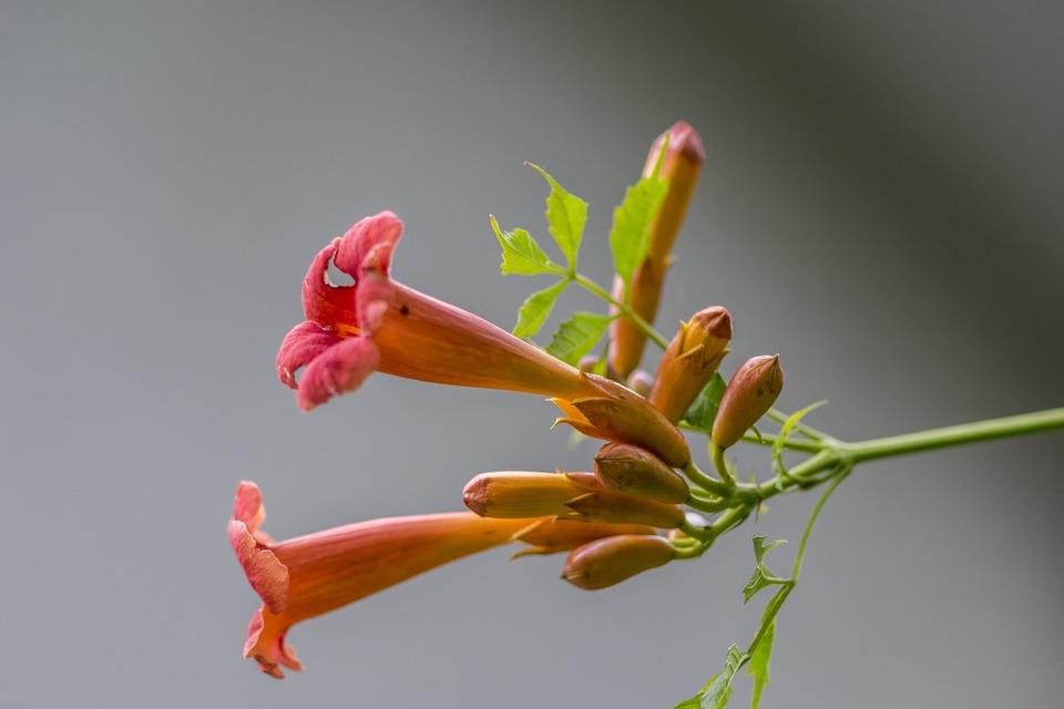 Nature, Flower, Plant, Summer, Bud, Flowers