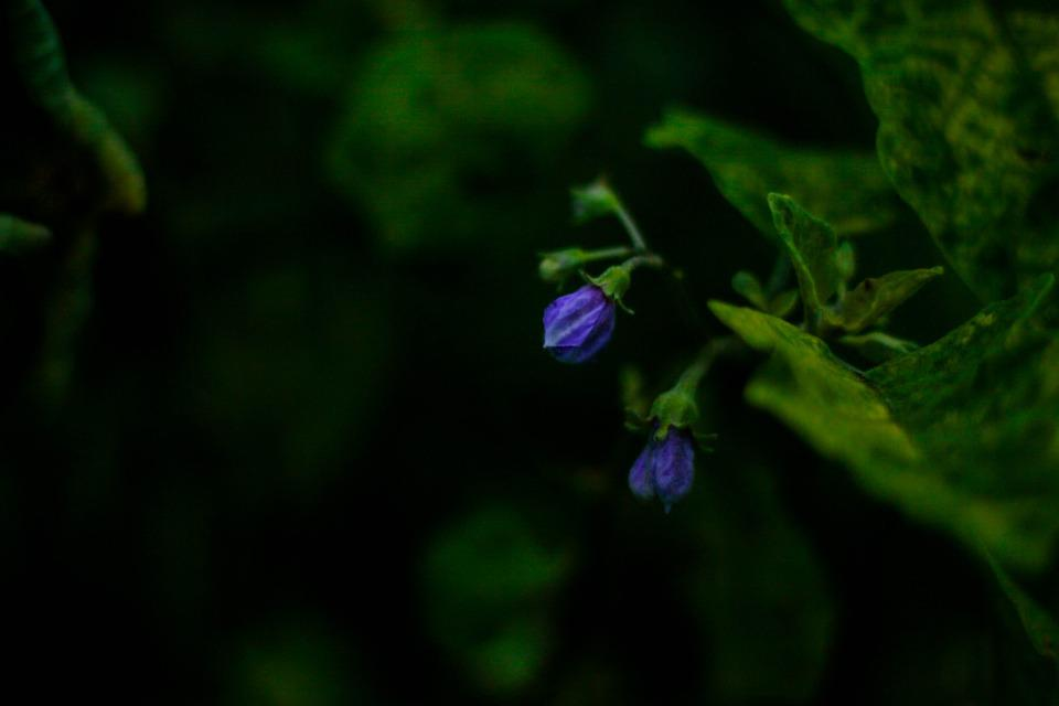 Flowers, Petals, Buds, Leaves, Foliage, Plant, Bloom