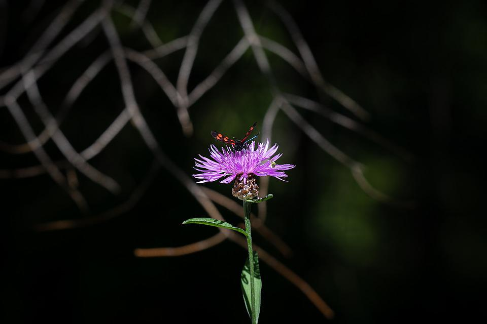 Flower, Plant, Forest Flower, Insect, Butterfly