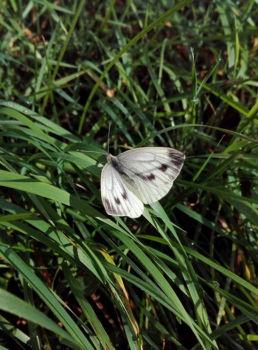 Nature, Summer, Plant, Outdoors, Leaf, Butterfly