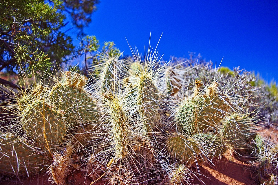 Cactus, Succulent, Nature, Plant, Green, Botanical