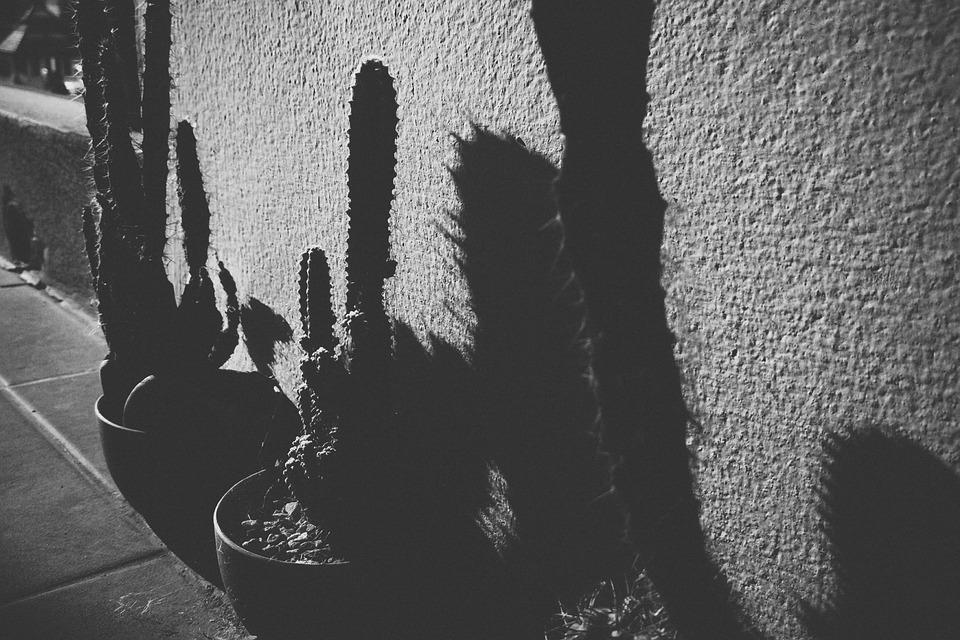 Light Shade, Black And White, Am Lonely, Cactus, Plant
