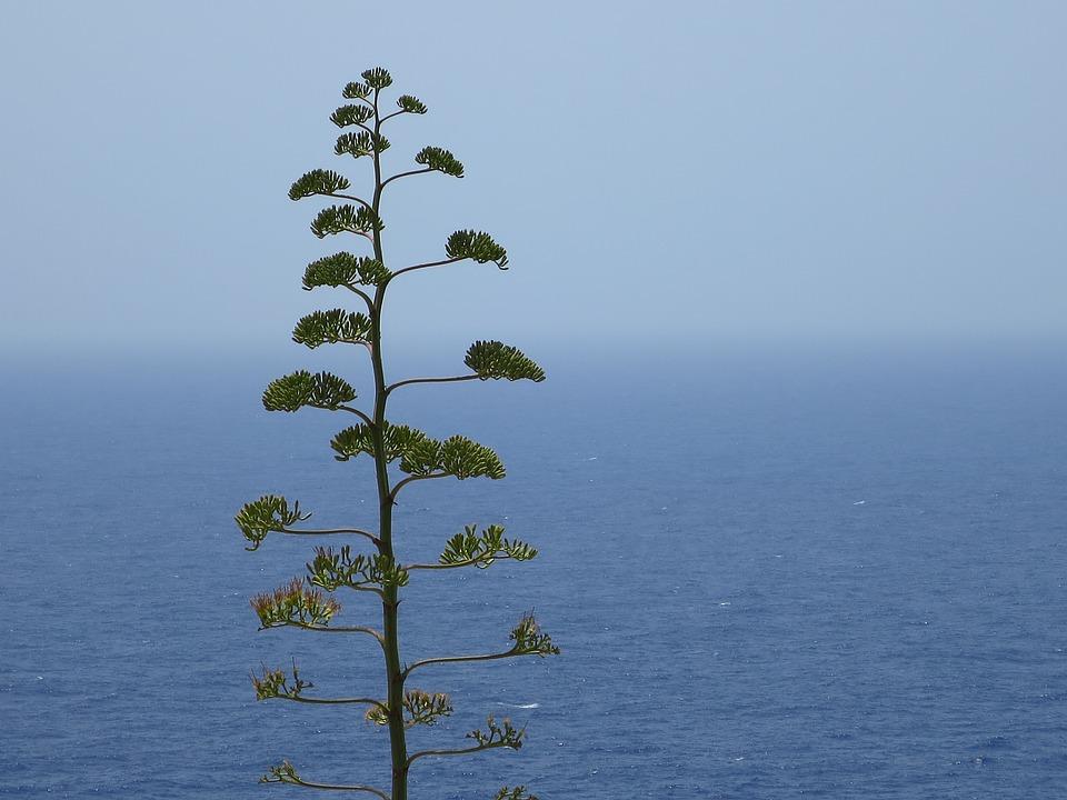 Malta, Sea, Plant, Cactus