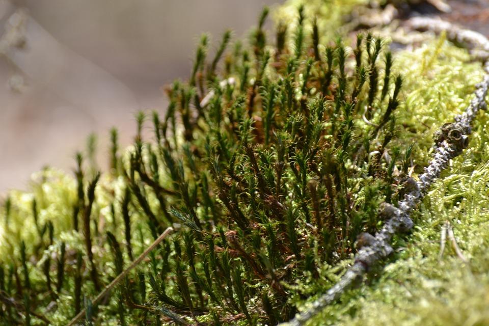 Nature, Plant, Close, Grass, Growth, Moss, Spring