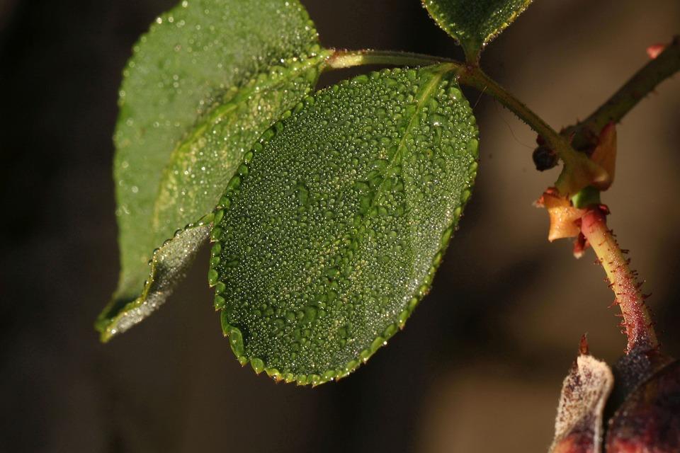Leaf, Wet, Drop Of Water, Plant, Rain, Drip, Close Up