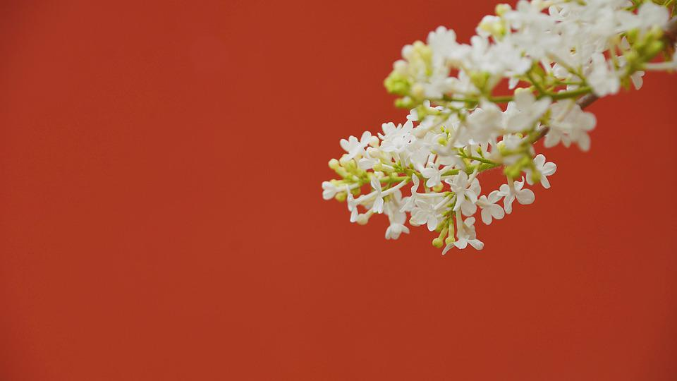 Wall, Flower, Plant, Close-up, Color, Beautiful